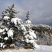Winter Storm On Natural Bridge - D001598 Art Print