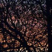 Winter Sunset Silhouette Art Print
