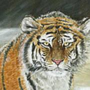 Winter Tiger Art Print