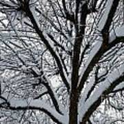 Winter Tree 1 Art Print