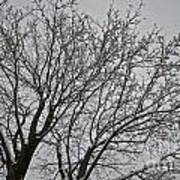 Winter Tree 6 Art Print