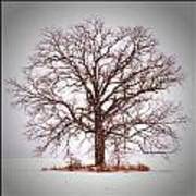 Winter Tree 8x10 Crop With White Bars Art Print