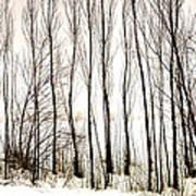 Winter Tree Fence 13283 Art Print