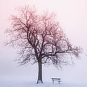 Winter Tree In Fog At Sunrise Art Print