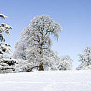 Winter Tree Line Art Print by Tim Gainey