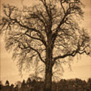 Winter Tree - Old Art Print