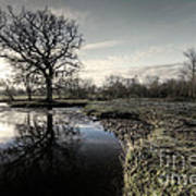 Winter Tree On The River Culm Art Print