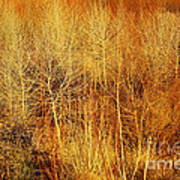 Winter Trees Color 4 Art Print