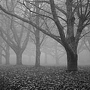 Winter Trees In The Mist Print by Georgia Fowler