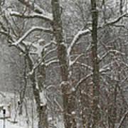 Winter Trees Art Print