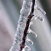 Winter Twig Art Print