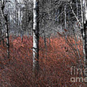 Winter Wetland I Art Print