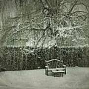 Winter Willow And Snow Covered Seat Art Print