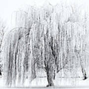 Winter Willow Art Print
