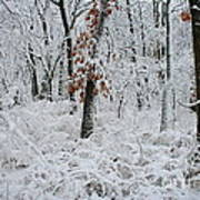 Winter Wonderland 2 Art Print