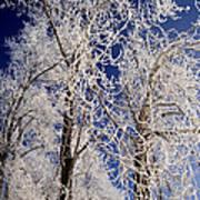 Winter Wonderland 7 Art Print