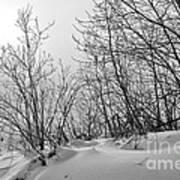Winter Wonderland Monochrome Art Print