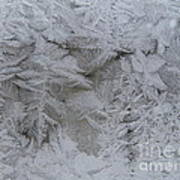Winter Wonderland Series #01 Art Print