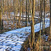 Winter Woods Walk Art Print