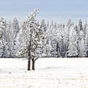Winter's Coat Art Print by Dee Cresswell