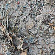 Winter's Mud Art Print