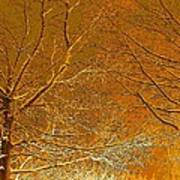 Winters Touch 2 Art Print