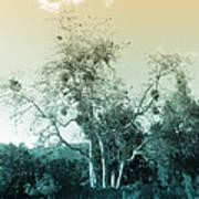 Winter's Tree Art Print