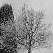 Wintery Tree Art Print