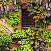 Wisteria On A Home In Zellenberg France 3 Art Print