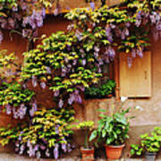 Wisteria On Home In Zellenberg 4 Art Print by Greg Matchick