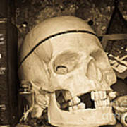 Witches Bookshelf Art Print