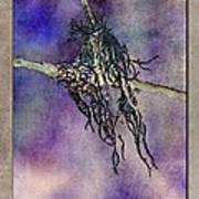 Witchride Art Print