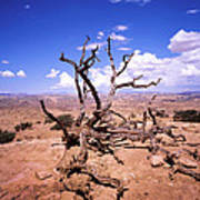 Withered Tree Paria Canyon Art Print