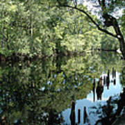 Withlacoochee River Reflections Art Print