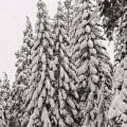 Wnter Snow At Shaver Lake Art Print