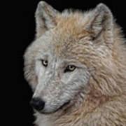 Wolf Bride Art Print