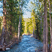 Wolf Creek Flowing Downstream  Art Print