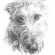 Wolf Hound Pencil Portrait Art Print