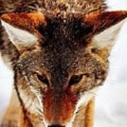 Wolf In The Wild Art Print