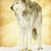 Wolf Shine Art Print