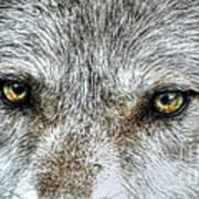 Wolf Wisdom Art Print
