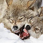 Wolves Rules Art Print