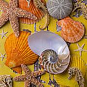 Wonderful Sea Life Art Print