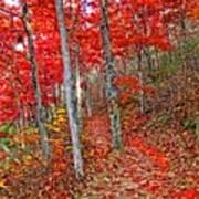 Wonders Of Autumn  Art Print