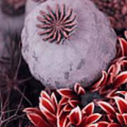 Wonderworld Of Flowers Art Print
