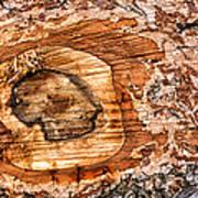 Wood Detail Art Print by Matthias Hauser
