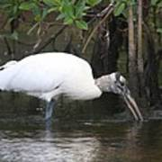 Wood Stork In The Swamp Art Print