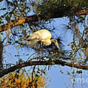Wood Stork Perch Art Print