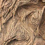 Wood Swirls Art Print