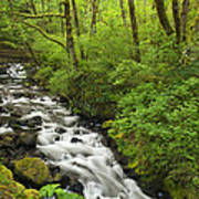 Wooded Stream In The Spring Art Print by Andrew Soundarajan